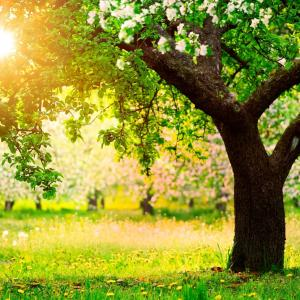 hd-trees-in-sunlight-wallpapers-free-download-amazing-high-definition-wallpapers-of-trees